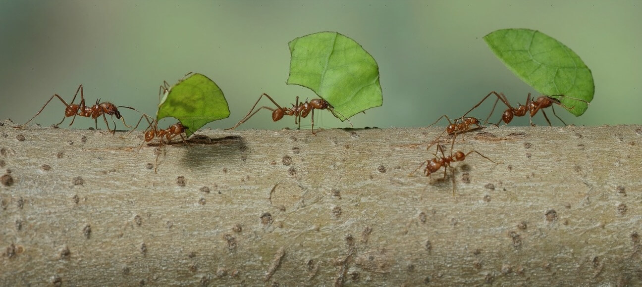 Why ants don't play
